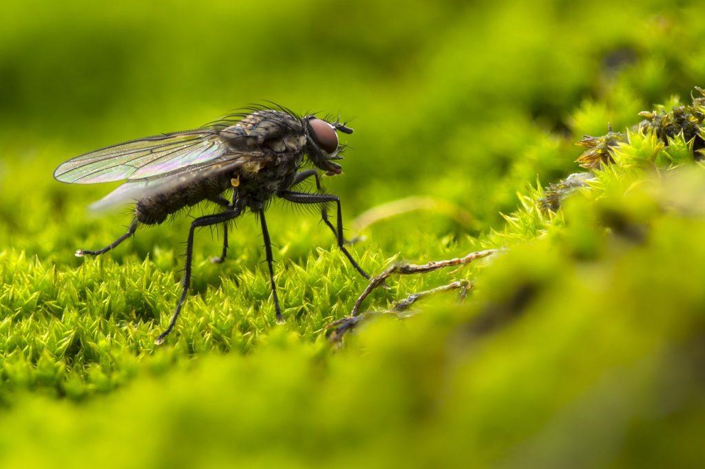 Comment se débarrasser des mouches à l'intérieur et à l'extérieur de votre maison